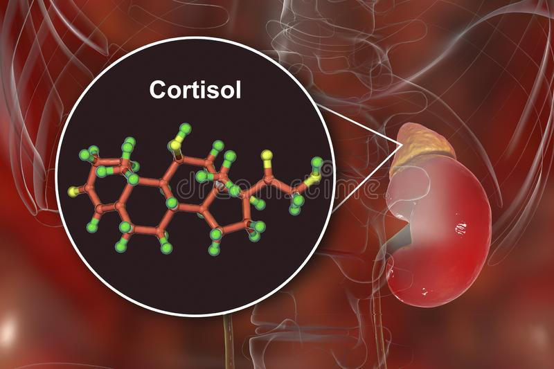 You are currently viewing Cortisol, Is It Really a Problem?